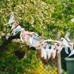Na festivalu sira i jabuka: Posetite Kalonu